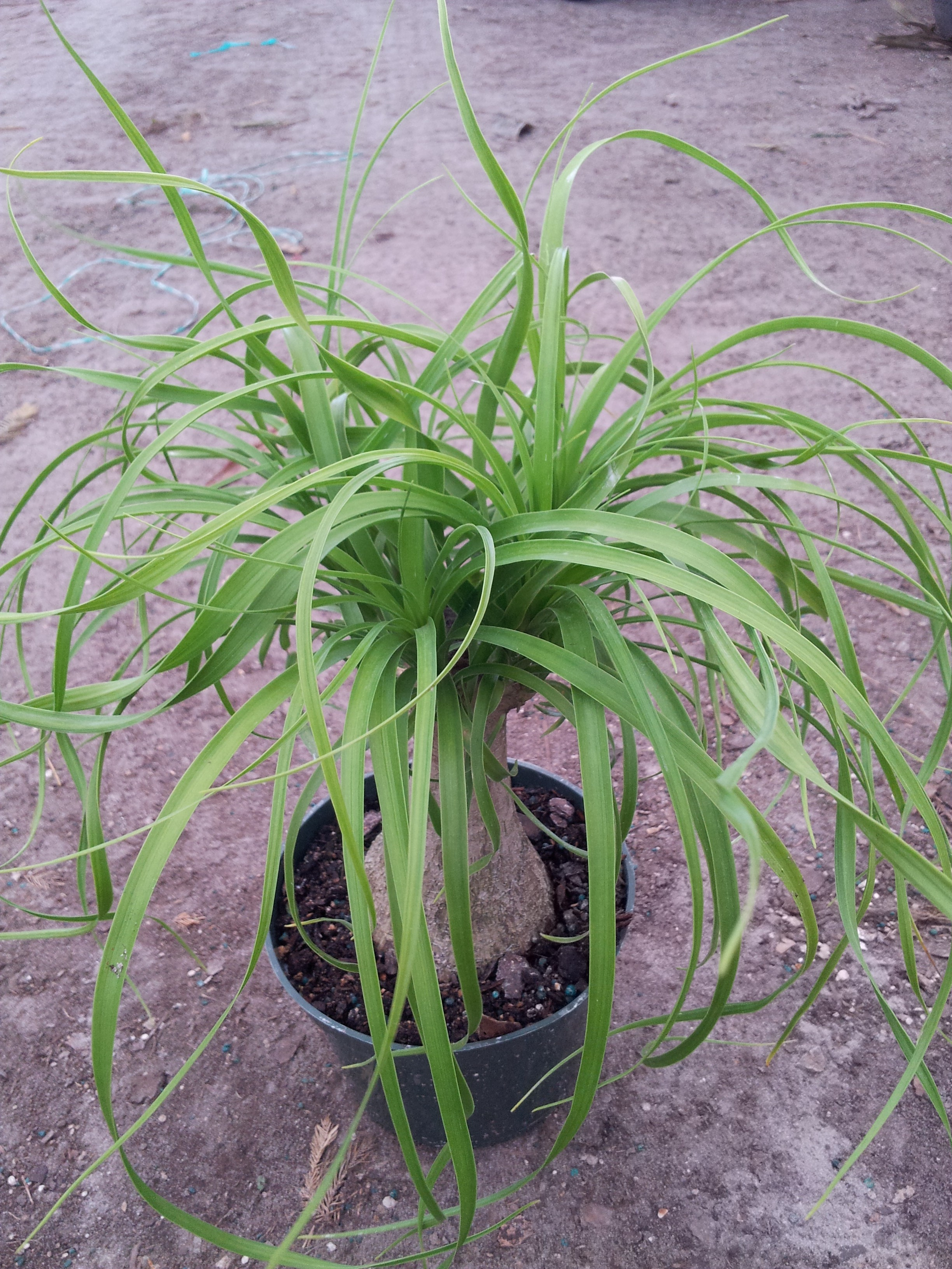 Miami tropical plants tropical plant company in miami for Plants for sale