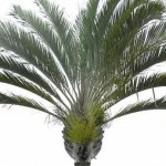 Triangle Palm 2