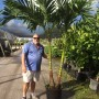 Adonidia Palm Double 1 of 2