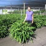 Kimberly Queen Fern 14 inch