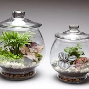 PEDESTAL JAR TERRARIUM WITH LID